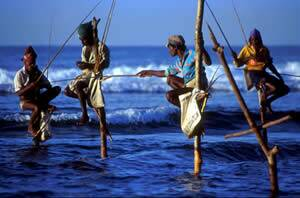 Stilt fishermen in Weligama Bay on the south west coast