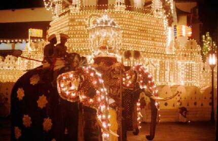 Tusker Rajah carries the tooth relic at the annual Kandy Peraheriya. The elephant was born in 1900 and died in 1985, having carried the casket annually for 50 years.